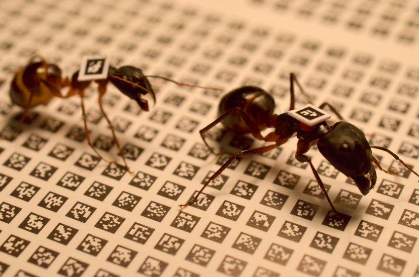 Osamelý mravec